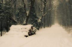 Die Straße im Wald Lizenzfreie Stockfotos