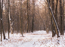 Die Straße im Wald im Winter Lizenzfreies Stockfoto