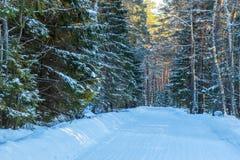 Die Straße im Winterwald Stockfotografie