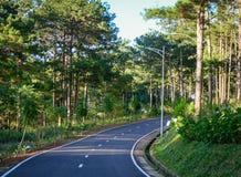 Die Straße am Kieferwald Lizenzfreie Stockfotos