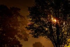 Die Straße nahe dem Baum nachts ist der eingehüllte Nebel, beleuchtet durch eine Lampe Stockfotografie
