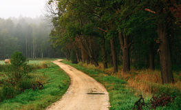 Die Straße nahe dem Wald Stockfotos