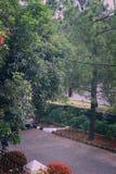 Die Straße voll des Baums Lizenzfreie Stockfotografie