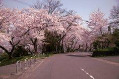 Die Straße von Kirschblüte Lizenzfreie Stockfotos