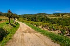 Die Straße zu den Weinbergen stockbilder