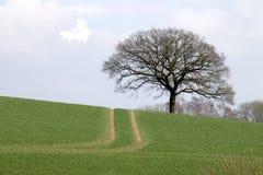 Die Straße zu einem Baum Stockfotos