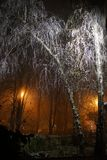 Die Straße zum Glättungswinter Park eingehüllt in Nebel lizenzfreie stockfotografie