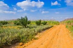 Die Straße zum Mais archiviert Stockfoto