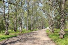 Die Straße zum Park Stockfotos