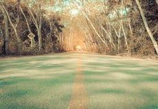Die Straße zwischen Bäumen Lizenzfreie Stockfotos