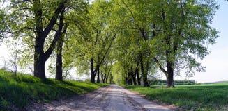 Die Straße zwischen den Bäumen stockbild