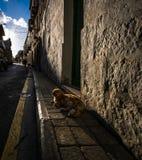 Die Straßen von Gozo victoria malta lizenzfreie stockfotos