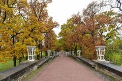 Die Straße mit gelben Bäumen lizenzfreie stockfotografie