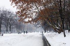 Die Straße wird mit Schneebaum bedeckt stockfotos