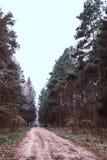 Die Stra?e ist ein Weg im Wald lizenzfreies stockbild