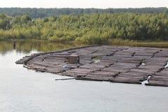 Die Strahlen auf einem Fluss stockbild