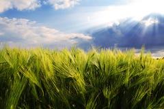 Die Strahlen der Sonne über dem Feld Lizenzfreies Stockfoto
