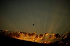 Die Strahlen der Sonne Stockfotografie