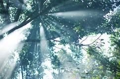 Die Strahlen der Sonne durchdringen durch die Niederlassungen der Bäume w Lizenzfreie Stockbilder