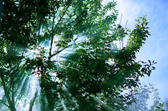 Die Strahlen der Sonne durchdringen durch die Niederlassungen der Bäume w Lizenzfreies Stockfoto