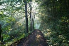 Die Strahlen der Sonne glänzen durch die grünen Bäume Stockfoto