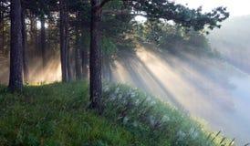 Die Strahlen der Sonne im Nebel stockbild