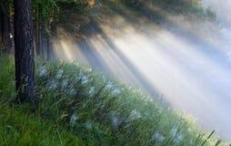 Die Strahlen der Sonne im Nebel lizenzfreie stockfotos