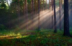 Die Strahlen der Sonne im Nebel stockfotos