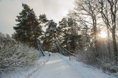 Die Strahlen der Sonne im schneebedeckten Park, schöne Landschaft Lizenzfreie Stockbilder