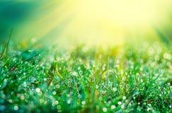 Die Strahlen der Sonne vom oben genannten und grünen Gras Lizenzfreie Stockfotos