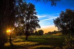 Die Strahlen der untergehenden Sonne, die durch die Blätter von den Bäumen wachsen am Rand des Waldes filtert Stockfoto