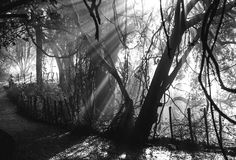 Die Strahlen des Lichtes brechend durch die nassen Niederlassungen der Bäume afrika sambia zimbabwe lizenzfreie stockfotos