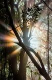 Die Strahlen des Lichtes brechend durch die nassen Niederlassungen der Bäume afrika sambia zimbabwe lizenzfreie stockfotografie