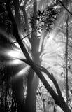 Die Strahlen des Lichtes brechend durch die nassen Niederlassungen der Bäume afrika sambia zimbabwe stockfotografie