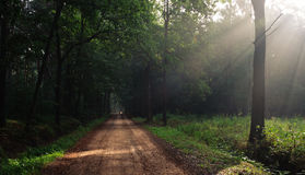 Die Strahlen im Wald stockfotografie