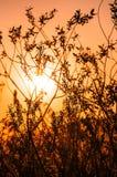 DIE STRAHLEN VON THE SUN DURCH die NIEDERLASSUNGEN Stockbilder