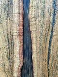 Die Struktur der Baumrinde stockbilder