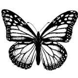 Die Struktur der Schmetterlingsskizzentätowierung Stockfoto