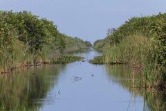 Die Sumpfgebiete Lizenzfreie Stockbilder