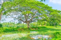 Die Sumpfgebiete von Sri Lanka Stockfotografie