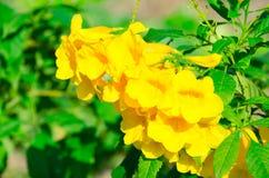 Die super wunderbare Spitze der gelben Blume entlang dem Superguten tag Stockfotos