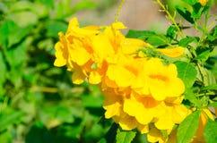 Die super wunderbare Spitze der gelben Blume entlang dem Superguten tag Lizenzfreie Stockbilder