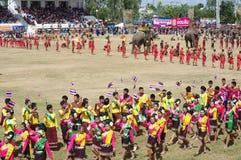 Die Surin-Elefant-Zusammenfassung Stockbilder