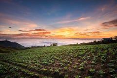Die Szene von Thailand über großen Kohlbauernhof auf dem Berg, pH Lizenzfreies Stockfoto