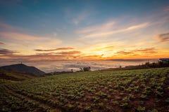 Die Szene von Thailand über großen Kohlbauernhof auf dem Berg, pH Stockfoto