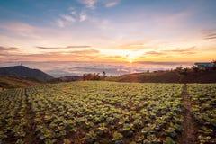 Die Szene von Thailand über großen Kohlbauernhof auf dem Berg, pH Lizenzfreie Stockbilder
