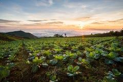 Die Szene von Thailand über großen Kohlbauernhof auf dem Berg, pH Lizenzfreie Stockfotografie