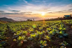 Die Szene von Thailand über großen Kohlbauernhof auf dem Berg, pH Lizenzfreies Stockbild