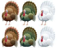 Die Türkei vektor abbildung