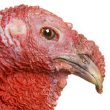 Die Türkei Lizenzfreie Stockfotografie